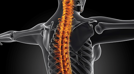 3D graphic of the spine